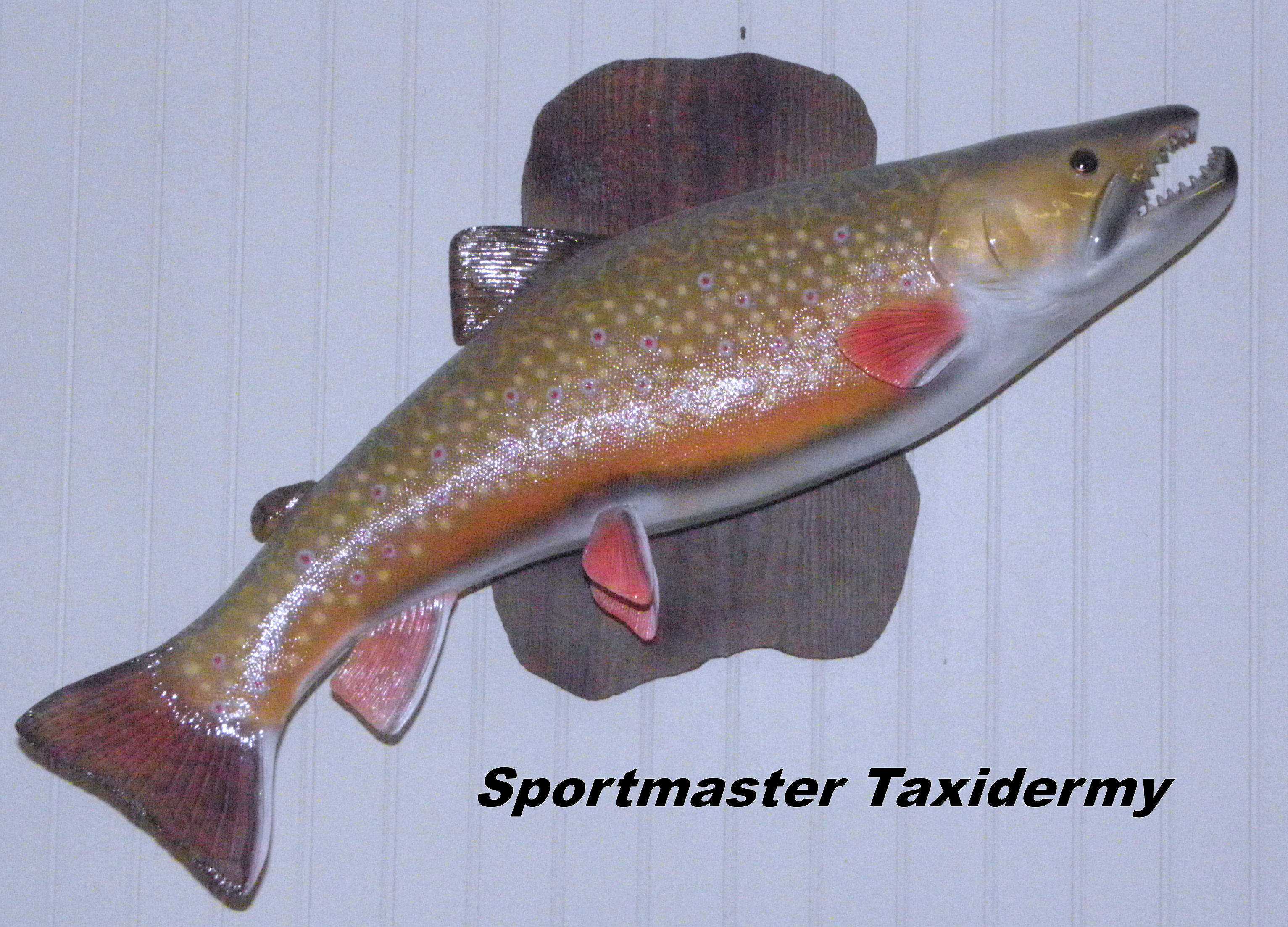 Trout stripe smallmouth largemouth bass fish taxidermy for How to taxidermy a fish
