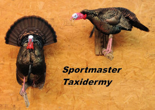 Wild Turkey Taxidermy Mounts Chattanooga Cleveland TN North Georgia