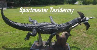 Alligator Taxidermy Mount Chattanooga Cleveland TN North Georgia