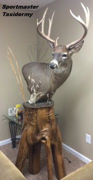 Whitetail Deer Pedestal Taxidermy Chattanooga Cleveland TN North Georgia