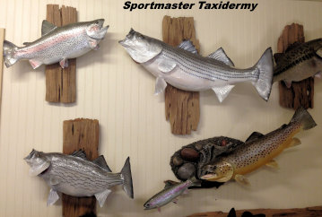 Fish Taxidermy Chattanooga Cleveland TN North Georgia