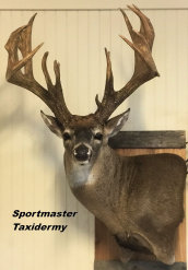 Whitetail Deer Taxidermy Mount Chattanooga Cleveland TN North Georgia