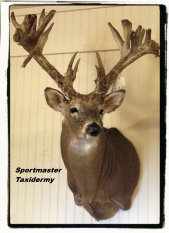 Whitetail Deer Taxidermy Chattanooga, Cleveland, TN & North GA