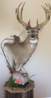 Whitetail Deer Taxidermy Pedestal Mount Chattanooga, Cleveland, TN & North GA
