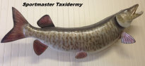 Musky Pike Taxidermy Chattanooga Cleveland TN North Georgia