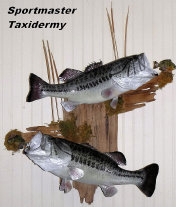 Largemouth Bass Taxidermy Chattanooga Cleveland TN North Georgia