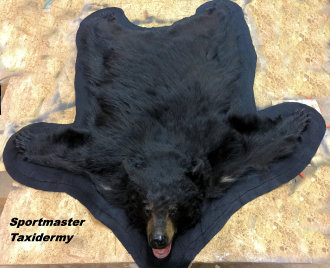 Bear Rug Taxidermy Chattanooga Cleveland TN North Georgia